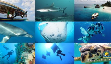 Dive Point Maldives